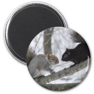 Aimant Écureuil noir et gris