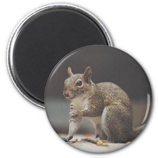 Aimant Écureuil pelucheux