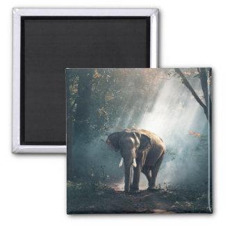 Aimant Éléphant asiatique dans une clairière ensoleillée