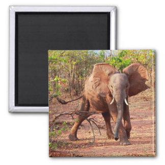 Aimant Éléphant dans la pose d'avertissement