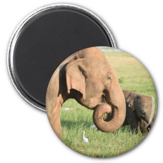 Aimant Éléphant de mère et de bébé