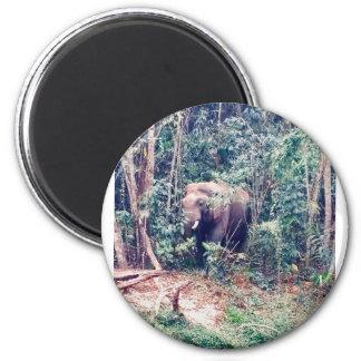 Aimant Éléphant en Thaïlande