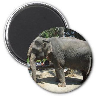 Aimant Éléphants en Thaïlande