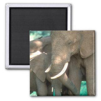 Aimant Éléphants protégeant des jeunes