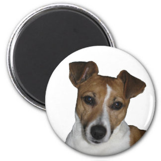 Aimant, environ, Jack Russell terriers Magnet Rond 8 Cm