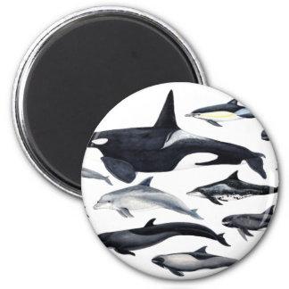 Aimant Famille des dauphins : orques, dauphins, marsopas