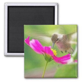 Aimant Faune animale d'oiseau de colibri florale