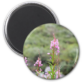 Aimant Fireweed