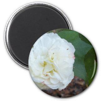 Aimant fleur blanche de mutabilis de ketmie