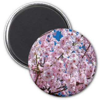 Aimant Fleur japonaise de cerise