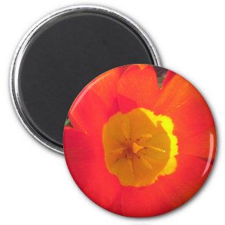 Aimant Fleur ouverte de tulipe de rouge et de jaune