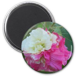 Aimant fleur variable de rose et blanche de ketmie