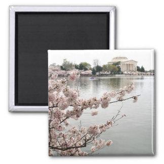Aimant Fleurs de cerisier - mémorial de Jefferson