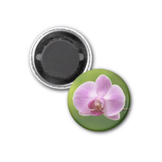 Aimant Fleurs de rose d'orchidée de mite