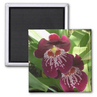 Aimant Floral élégant des orchidées II marron