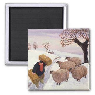 Aimant Foin de transport aux moutons en hiver