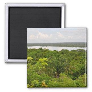 Aimant Forêt tropicale de l'Amérique Centrale à Belize