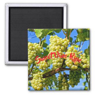 Aimant Fruit vert mûr de raisin de vigne douce