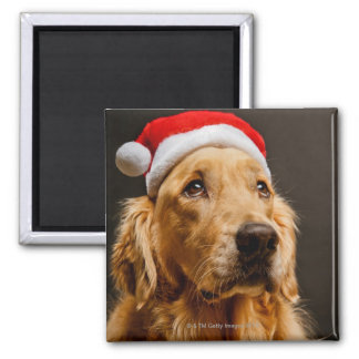 Aimant Golden retriever posant pour son Noël