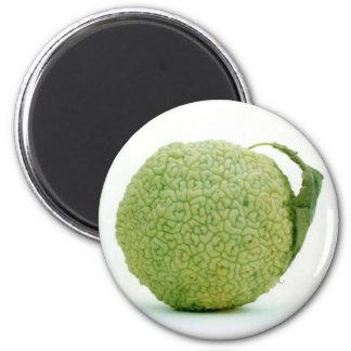 Aimant Grand Hedgeapple vert