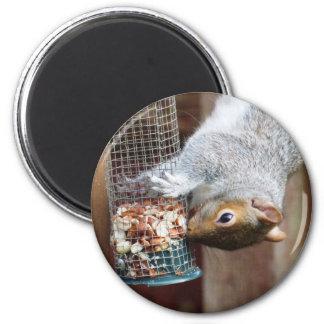 Aimant gris mignon d'écureuil