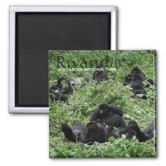 Aimant Groupe de gorille de montagne dans l'aimant des