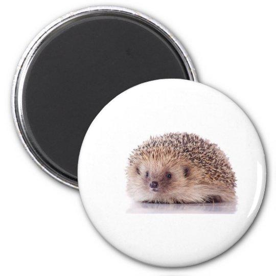 Aimant Hedgehog,