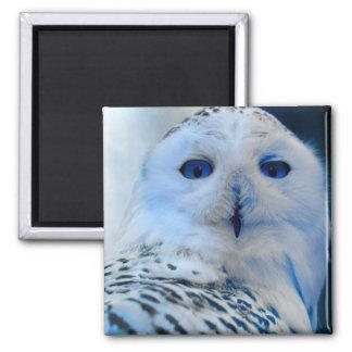 Aimant Hibou de neige observé par bleu