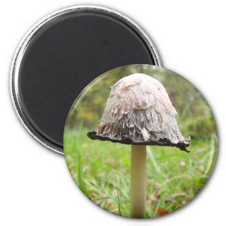 Aimant hirsute de champignon de casquette d'encre