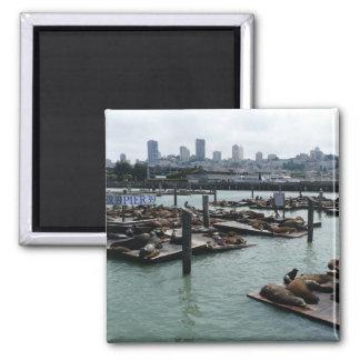 Aimant Horizon de ville d'otaries de San Francisco et de
