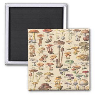 Aimant Illustration vintage des champignons