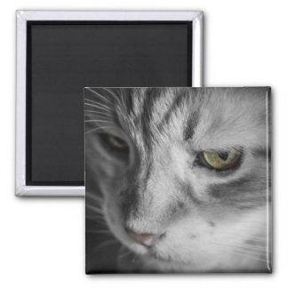 Aimant Image noire et blanche de chat