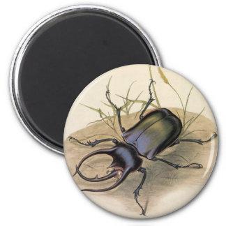 Aimant Insectes vintages et insectes, scarabée de