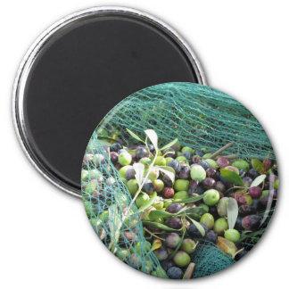 Aimant Juste olives sélectionnées sur le filet pendant le