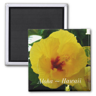Aimant Ketmie de jaune de fleur d'état d'Hawaï