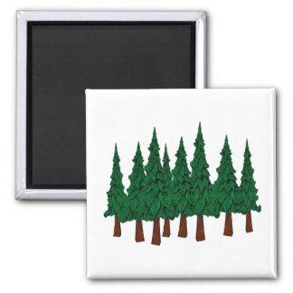 Aimant La forêt à feuillage persistant