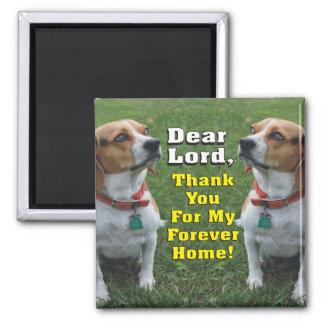 Aimant La prière du beagle