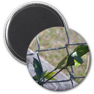Aimant la vigne une vie de barrière de maillon de chaîne