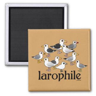 Aimant Larophile