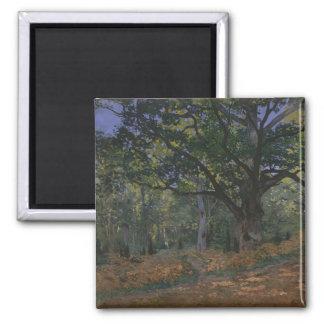 Aimant Le chêne de Bodmer, forêt de Fontainebleau