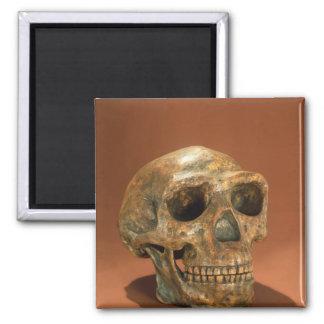 Aimant Le crâne reconstruit d'homme de Pékin