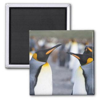 Aimant Le Roi pingouins