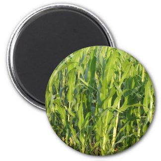 Aimant Les plantes de maïs vert se développent en été