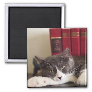 Aimant littéraire de chat