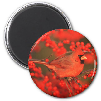 Aimant Mâle cardinal du nord rouge, IL