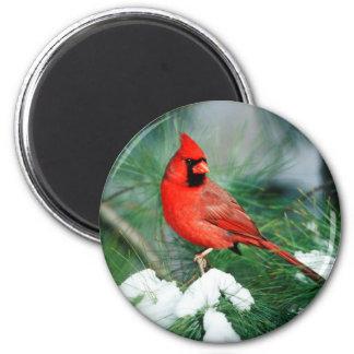 Aimant Mâle cardinal du nord sur l'arbre, IL