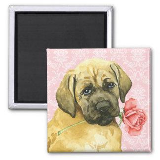 Aimant Mastiff rose de Valentine