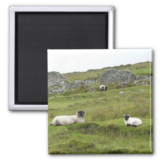 Aimant Mouton Irlandais