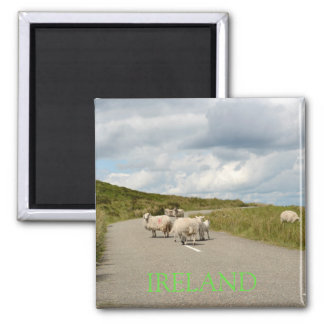 Aimant Moutons sur la route dans l'aimant des textes de
