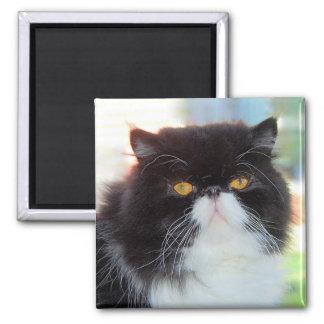 Aimant noir et blanc de chat persan